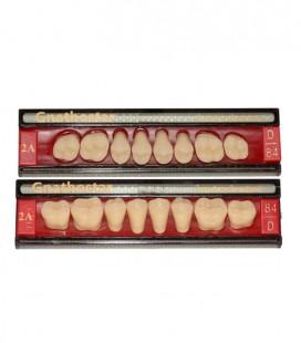 Zęby Gnathostar według kolornika A-D