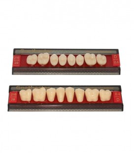Zęby Gnathostar 8 szt.