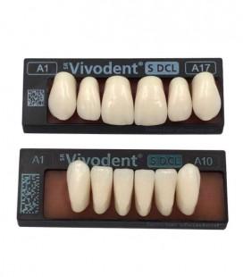 Zęby SR Vivodent S DCL 6 sztuk
